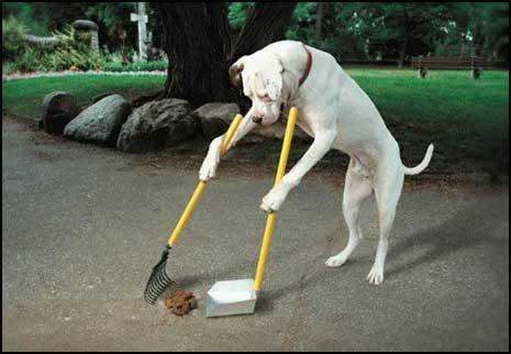 Hund sopar upp hundbajs